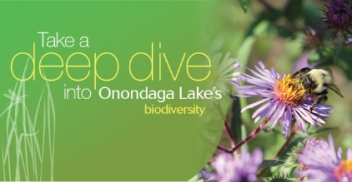 The Onondaga Lake Bioblitz is just one of many events celebrating Dr. Wheeler's inauguration as ESF's new President.